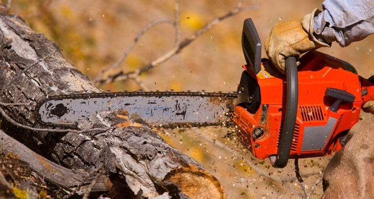 Chainsaw Safety Guide